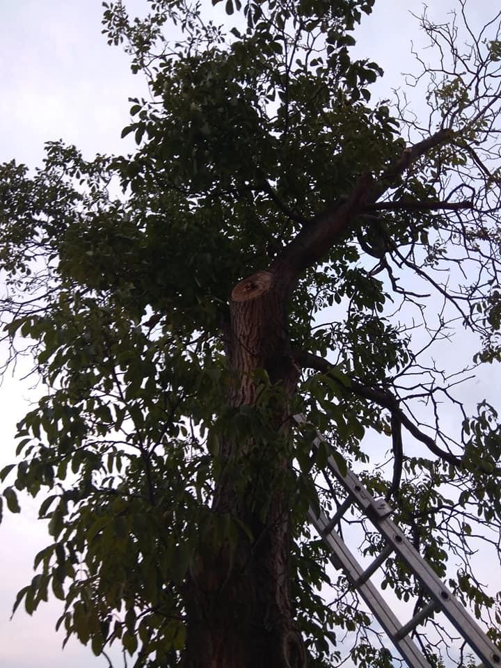 Pád stromu